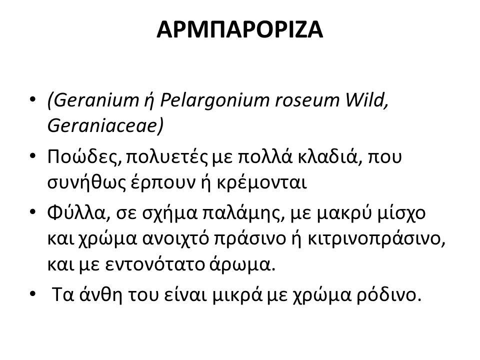 ΑΡΜΠΑΡΟΡΙΖΑ (Geranium ή Pelargonium roseum Wild, Geraniaceae) Ποώδες, πολυετές με πολλά κλαδιά, που συνήθως έρπουν ή κρέμονται Φύλλα, σε σχήμα παλάμης