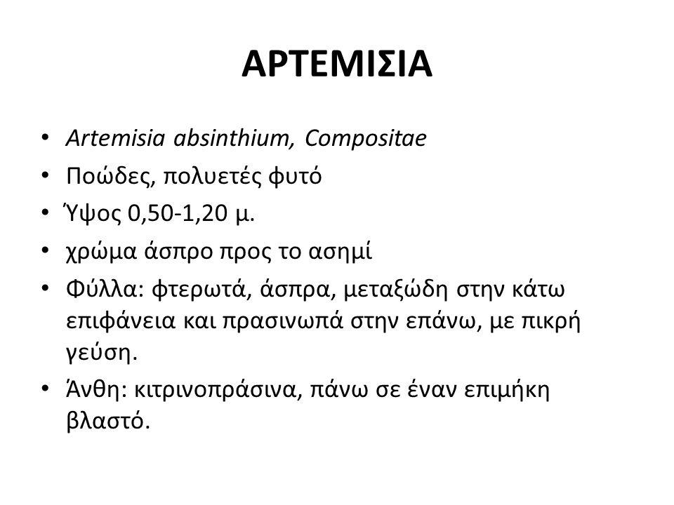 Artemisia absinthium, Compositae Ποώδες, πολυετές φυτό Ύψος 0,50-1,20 μ. χρώμα άσπρο προς το ασημί Φύλλα: φτερωτά, άσπρα, μεταξώδη στην κάτω επιφάνεια
