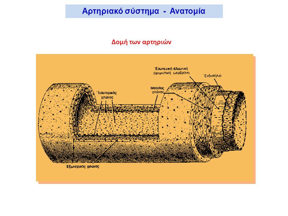 Δομή των αρτηριών Αρτηριακό σύστημα - Ανατομία