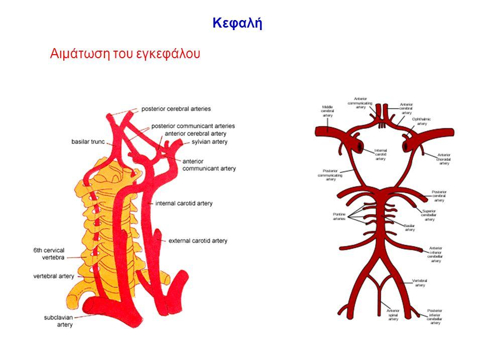 Συμπτώματα εγκεφαλικής ισχαιμίας Καρωτιδικό σύστημα –Εστιακή νευρολογική σημειολογία –Παροδικά αγγειακά εγκεφαλικά επεισόδια (TIAS) –Παροδική αμαύρωση (amaurosis fugax) –Μόνιμα ΑΕΕ (strokes) Σπονδυλοβασικό σύστημα –Συμπτώματα από τον οπίσθιο εγκέφαλο Διαταραχές ισορροπίας, βάδισης, αιμωδία προσώπου, διπλωπία, δυσαρθρία, ίλιγγος Σύνδρομο υποκλοπής υποκλειδίου αρτηρίας –Κεντρική απόφραξη ή στένωση υποκλειδίου αρτηρίας –Σε περίπτωση έντονης άσκησης άνω άκρου Συμπτώματα παροδικής εγκεφαλικής ισχαιμίας (ζάλη, απώλεια συνείδησης κλπ.) Κεφαλή