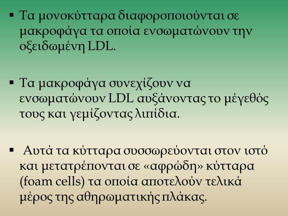  Τα μονοκύτταρα διαφοροποιούνται σε μακροφάγα τα οποία ενσωματώνουν την οξειδωμένη LDL.
