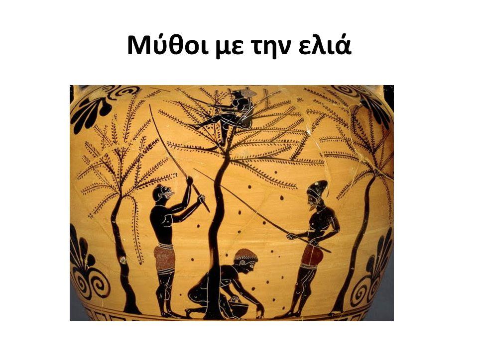 Η ελιά του Αρισταίου Ο Αρισταίος ήταν γιος του Απόλλωνα και της Κυρήνης, γεννήθηκε στη Λιβύη και ο Ερμής τον πήρε και τον πήγε στη Γαία και στις Ώρες για να τον αναθρέψουν.