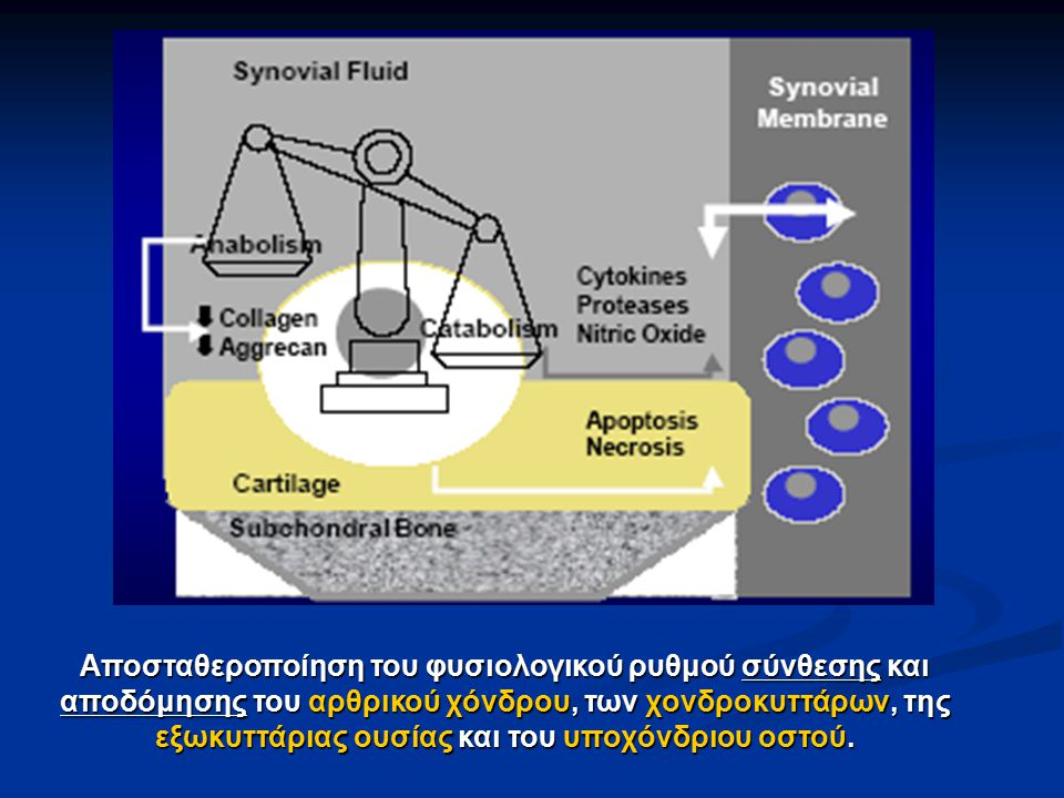 Αποσταθεροποίηση του φυσιολογικού ρυθμού σύνθεσης και αποδόμησης του αρθρικού χόνδρου, των χονδροκυττάρων, της εξωκυττάριας ουσίας και του υποχόνδριου
