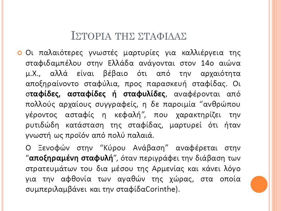 Ι ΣΤΟΡΙΑ ΤΗΣ ΣΤΑΦΙΔΑΣ Οι παλαιότερες γνωστές μαρτυρίες για καλλιέργεια της σταφιδαμπέλου στην Ελλάδα ανάγονται στον 14ο αιώνα μ.Χ., αλλά είναι βέβαιο