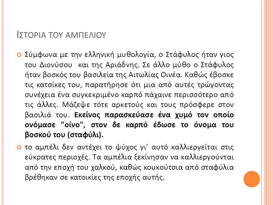 Ι ΣΤΟΡΙΑ ΤΟΥ ΑΜΠΕΛΙΟΥ Σύμφωνα με την ελληνική μυθολογία, ο Στάφυλος ήταν γιος του Διονύσου και της Αριάδνης. Σε άλλο μύθο ο Στάφυλος ήταν βοσκός του β