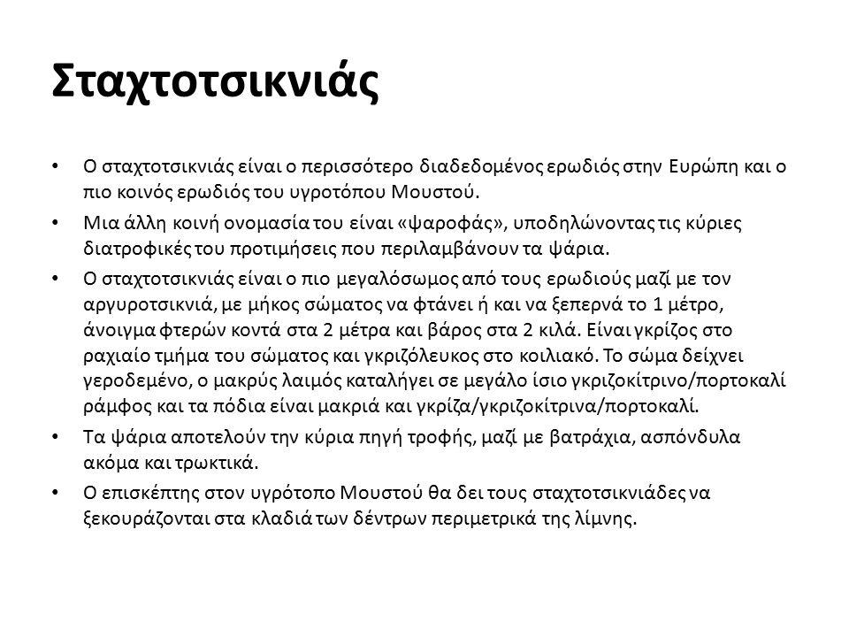 Σταχτοτσικνιάς Ο σταχτοτσικνιάς είναι ο περισσότερο διαδεδομένος ερωδιός στην Ευρώπη και ο πιο κοινός ερωδιός του υγροτόπου Μουστού. Μια άλλη κοινή ον