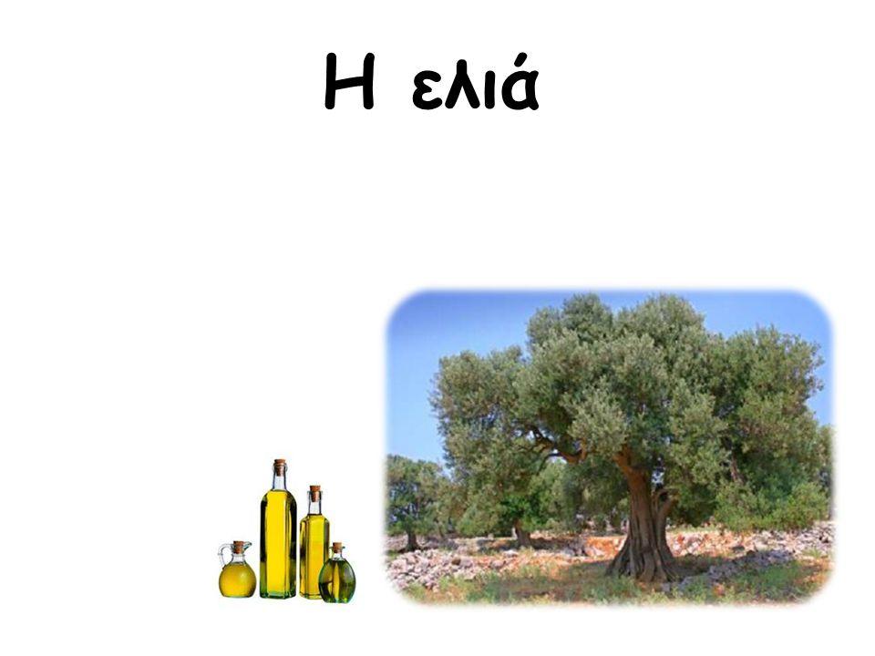 ΕΛΙΑ ΚΑΙ ΠΕΡΙΒΑΛΛΟΝ Το δέντρο της ελιάς.Τόποι καλλιέργειας στην Ελλάδα και τον κόσμο.