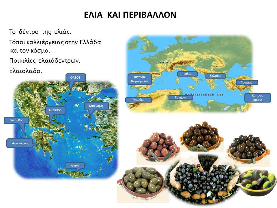 ΕΛΙΑ ΚΑΙ ΠΕΡΙΒΑΛΛΟΝ Το δέντρο της ελιάς. Τόποι καλλιέργειας στην Ελλάδα και τον κόσμο. Ποικιλίες ελαιόδεντρων. Ελαιόλαδο. Πελοπόννησος Κρήτη Ζάκυνθος