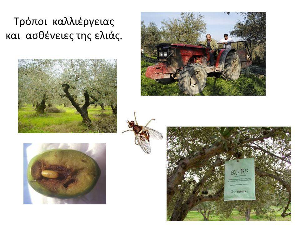 Προϊόντα που προέρχονται από την ελιά (ελαιόλαδο, πάστα ελιάς, σαπούνι, πυρήνα, πυρηνέλαιο,...