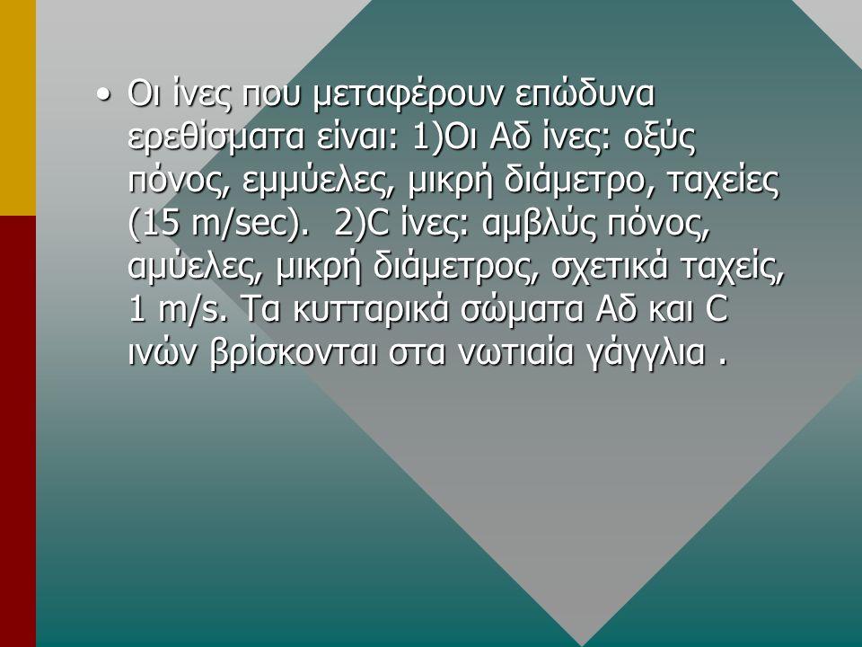 Οι ίνες που μεταφέρουν επώδυνα ερεθίσματα είναι: 1)Οι Αδ ίνες: οξύς πόνος, εμμύελες, μικρή διάμετρο, ταχείες (15 m/sec). 2)C ίνες: αμβλύς πόνος, αμύελ