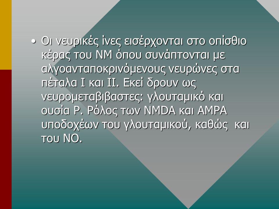 ΥΠΟΔΟΧΕΙΣ ΟΠΙΟΕΙΔΩΝ Μ (μ1, μ2), κ, δ (δ1, δ2)υποδοχείς.