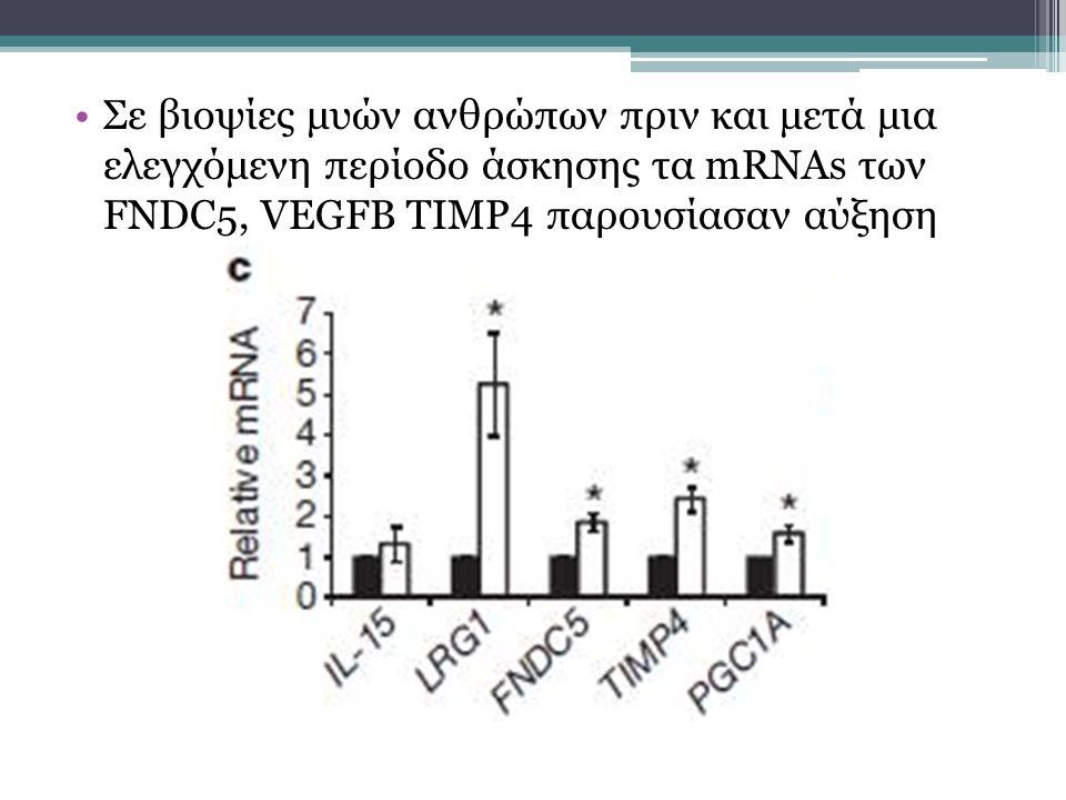 Σε βιοψίες μυών ανθρώπων πριν και μετά μια ελεγχόμενη περίοδο άσκησης τα mRNAs των FNDC5, VEGFB TIMP4 παρουσίασαν αύξηση
