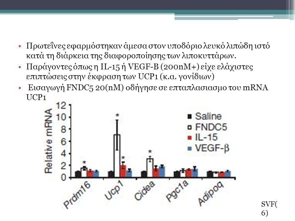 Πρωτεΐνες εφαρμόστηκαν άμεσα στον υποδόριο λευκό λιπώδη ιστό κατά τη διάρκεια της διαφοροποίησης των λιποκυττάρων.