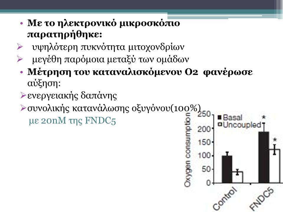Με το ηλεκτρονικό μικροσκόπιο παρατηρήθηκε:  υψηλότερη πυκνότητα μιτοχονδρίων  μεγέθη παρόμοια μεταξύ των ομάδων Μέτρηση του καταναλισκόμενου Ο2 φανέρωσε αύξηση:  ενεργειακής δαπάνης  συνολικής κατανάλωσης οξυγόνου(100%) με 20nM της FNDC5