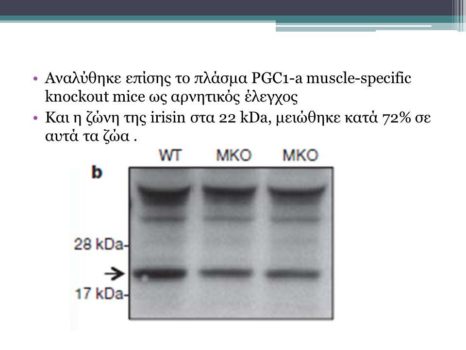 Αναλύθηκε επίσης το πλάσμα PGC1-a muscle-specific knockout mice ως αρνητικός έλεγχος Και η ζώνη της irisin στα 22 kDa, μειώθηκε κατά 72% σε αυτά τα ζώα.