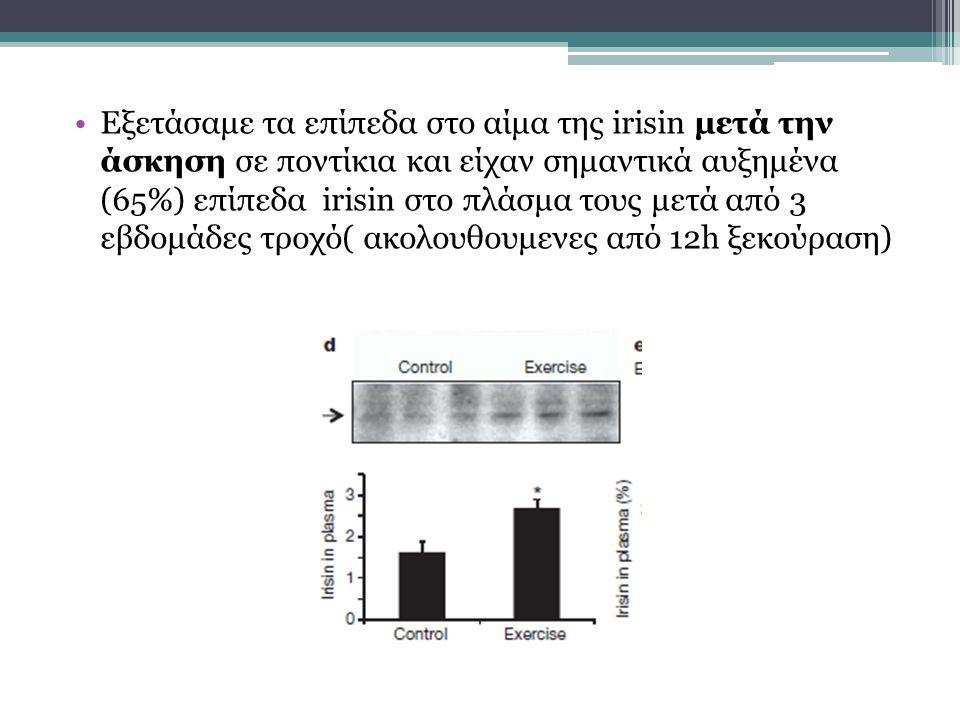 Εξετάσαμε τα επίπεδα στο αίμα της irisin μετά την άσκηση σε ποντίκια και είχαν σημαντικά αυξημένα (65%) επίπεδα irisin στο πλάσμα τους μετά από 3 εβδομάδες τροχό( ακολουθουμενες από 12h ξεκούραση)