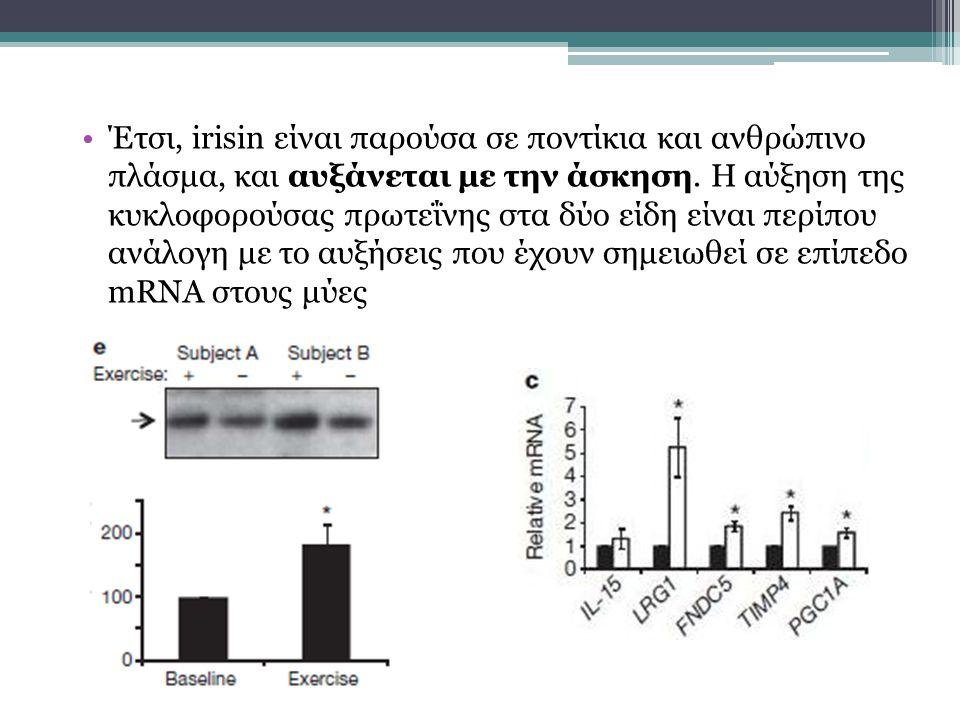 Έτσι, irisin είναι παρούσα σε ποντίκια και ανθρώπινο πλάσμα, και αυξάνεται με την άσκηση.