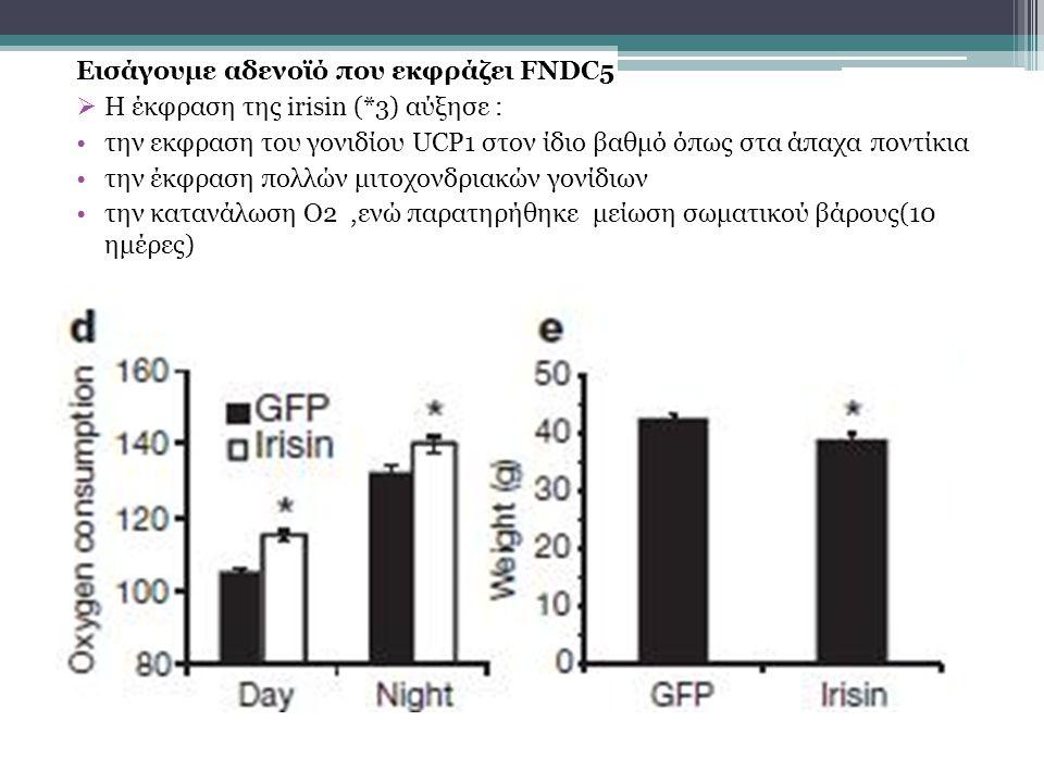 Εισάγουμε αδενοϊό που εκφράζει FNDC5  Η έκφραση της irisin (*3) αύξησε : την εκφραση του γονιδίου UCP1 στον ίδιο βαθμό όπως στα άπαχα ποντίκια την έκφραση πολλών μιτοχονδριακών γονίδιων την κατανάλωση O2,ενώ παρατηρήθηκε μείωση σωματικού βάρους(10 ημέρες)