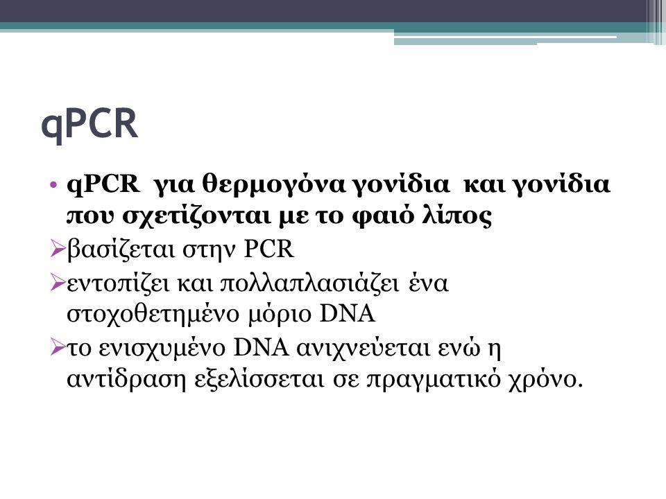 qPCR qPCR για θερμογόνα γονίδια και γονίδια που σχετίζονται με το φαιό λίπος  βασίζεται στην PCR  εντοπίζει και πολλαπλασιάζει ένα στοχοθετημένο μόριο DNA  το ενισχυμένο DNA ανιχνεύεται ενώ η αντίδραση εξελίσσεται σε πραγματικό χρόνο.