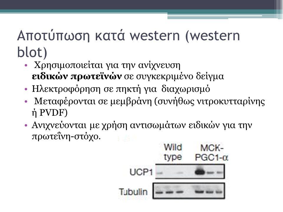 Αποτύπωση κατά western (western blot) Χρησιμοποιείται για την ανίχνευση ειδικών πρωτεϊνών σε συγκεκριμένο δείγμα Ηλεκτροφόρηση σε πηκτή για διαχωρισμό Μεταφέρονται σε μεμβράνη (συνήθως νιτροκυτταρίνης ή PVDF) Ανιχνεύονται με χρήση αντισωμάτων ειδικών για την πρωτεΐνη-στόχο.