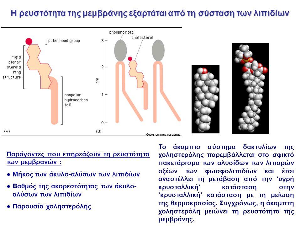 Παράγοντες που επηρεάζουν τη ρευστότητα των μεμβρανών : ● Μήκος των άκυλο-αλύσων των λιπιδίων ● Βαθμός της ακορεστότητας των άκυλο- αλύσων των λιπιδίων ● Παρουσία χοληστερόλης Το άκαμπτο σύστημα δακτυλίων της χοληστερόλης παρεμβάλλεται στο σφικτό πακετάρισμα των αλυσίδων των λιπαρών οξέων των φωσφολιπιδίων και έτσι αναστέλλει τη μετάβαση από την 'υγρή κρυσταλλική' κατάσταση στην 'κρυσταλλική' κατάσταση με τη μείωση της θερμοκρασίας.