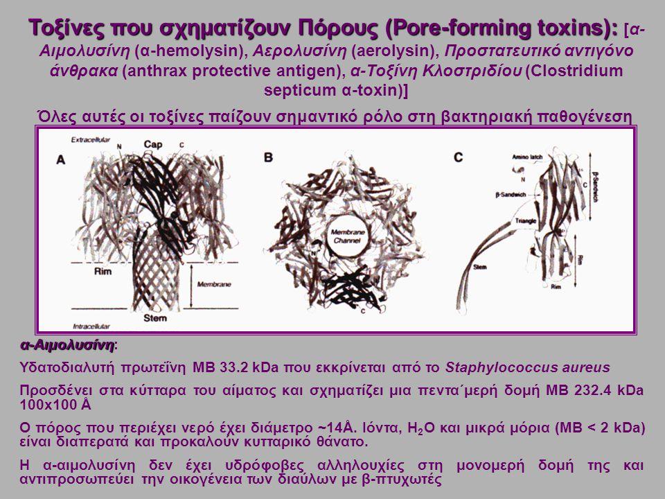 α-Αιμολυσίνη α-Αιμολυσίνη: Υδατοδιαλυτή πρωτεΐνη ΜΒ 33.2 kDa που εκκρίνεται από το Staphylococcus aureus Προσδένει στα κύτταρα του αίματος και σχηματίζει μια πεντα΄μερή δομή ΜΒ 232.4 kDa 100x100 Å Ο πόρος που περιέχει νερό έχει διάμετρο ~14Å.