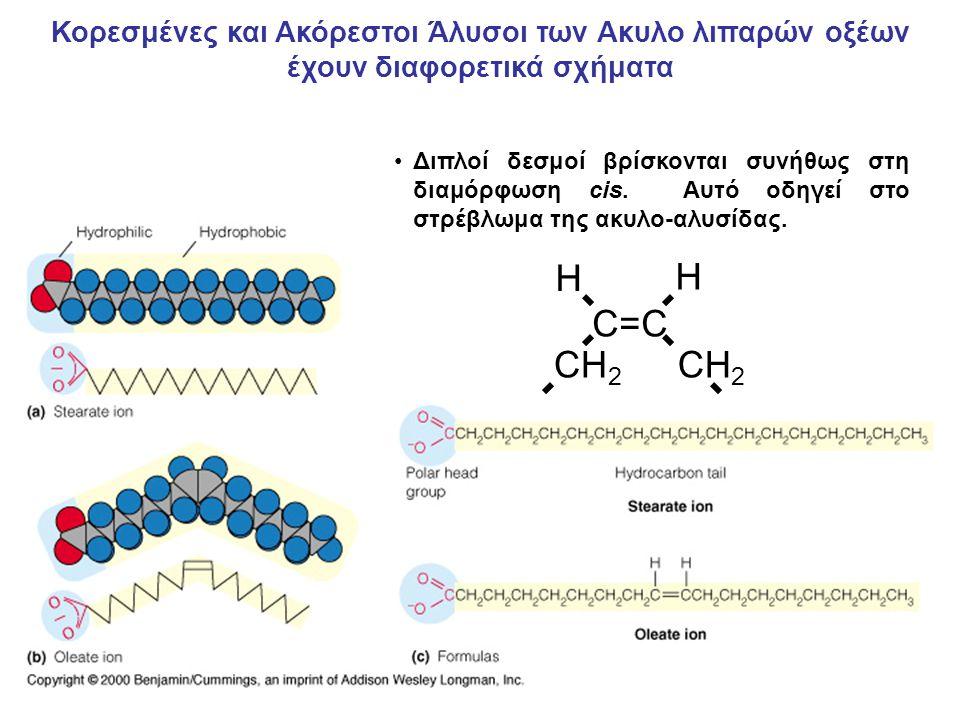 O    R 1 – C – O – C H 2   R 2 – C – O – CH O         O H 2 C - O - P – O -   O – Φωαφατιδικό η φωσφο- διακυλογλυκερόλη είναι το ενδιάμεσο της βιοσύνθεσης πολλών φωσφολιπιδίων Τυπικές Αμινοαλκοόλες: Χολίνη OH-CH 2 -CH 2 -N + (CH 3 ) 3 Αιθανολαμίνη OH-CH 2 -CH 2 -NH + 3 Σερίνη OH-CH 2 -CH – COO -   NH + 3 Γλυκερόλη OH-CH 2 -CH–CH 2 -OH   OH Ινοσιτόλη Κύρια Φωσφολιπίδια στις Κυτταρικές μεμβράνες των Θηλαστικών Τα φωσφολιπίδια παράγονται με την εστεροποίηση της φωσφορικής ομάδας του φωσφατιδίου με ένα υδροξύλιο μιας από αρκετές αμινοαλκοόλες