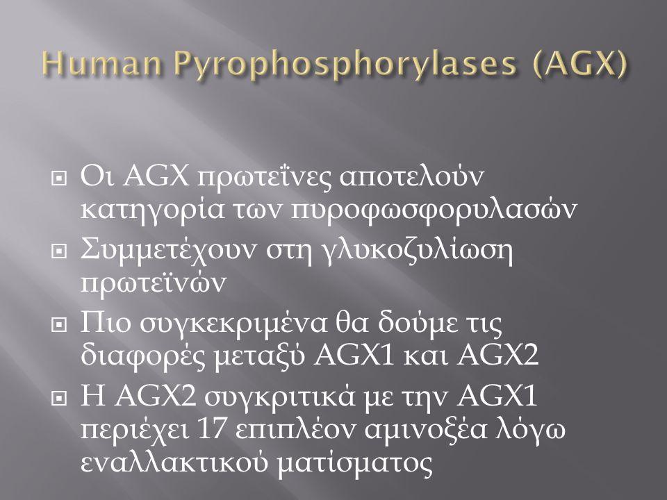  Οι AGX πρωτεΐνες αποτελούν κατηγορία των πυροφωσφορυλασών  Συμμετέχουν στη γλυκοζυλίωση πρωτεϊνών  Πιο συγκεκριμένα θα δούμε τις διαφορές μεταξύ A