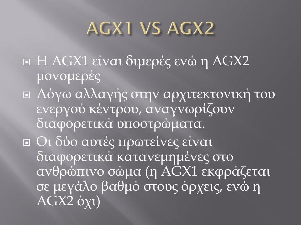 H AGX1 είναι διμερές ενώ η AGX2 μονομερές  Λόγω αλλαγής στην αρχιτεκτονική του ενεργού κέντρου, αναγνωρίζουν διαφορετικά υποστρώματα.  Οι δύο αυτέ