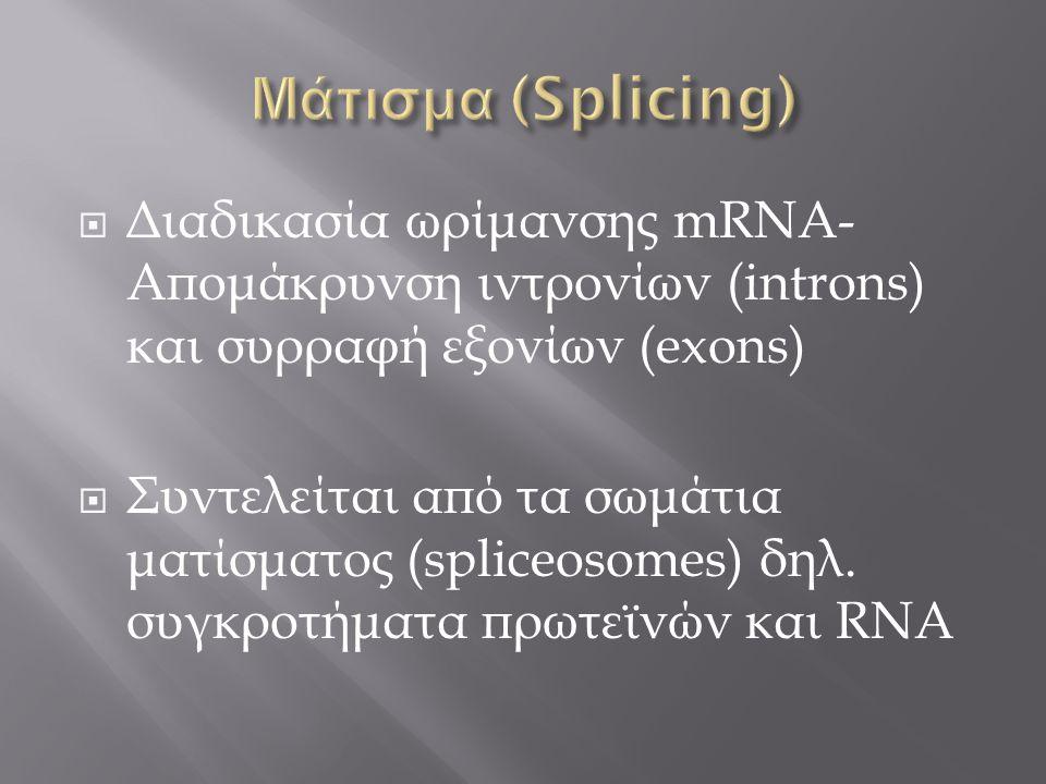 Διαδικασία ωρίμανσης mRNA- Απομάκρυνση ιντρονίων (introns) και συρραφή εξονίων (exons)  Συντελείται από τα σωμάτια ματίσματος (spliceosomes) δηλ. σ