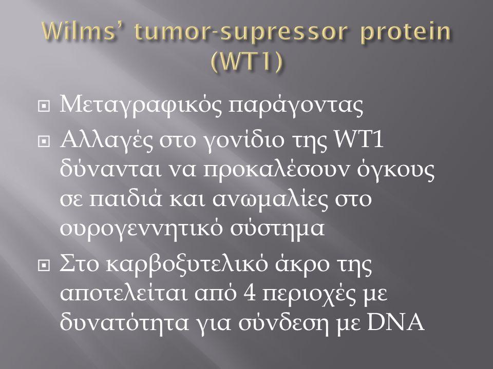  Μεταγραφικός παράγοντας  Αλλαγές στο γονίδιο της WT1 δύνανται να προκαλέσουν όγκους σε παιδιά και ανωμαλίες στο ουρογεννητικό σύστημα  Στο καρβοξυ