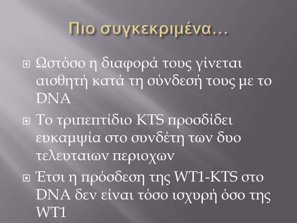  Ωστόσο η διαφορά τους γίνεται αισθητή κατά τη σύνδεσή τους με το DNA  Το τριπεπτίδιο KTS προσδίδει ευκαμψία στο συνδέτη των δυο τελευταιων περιοχων