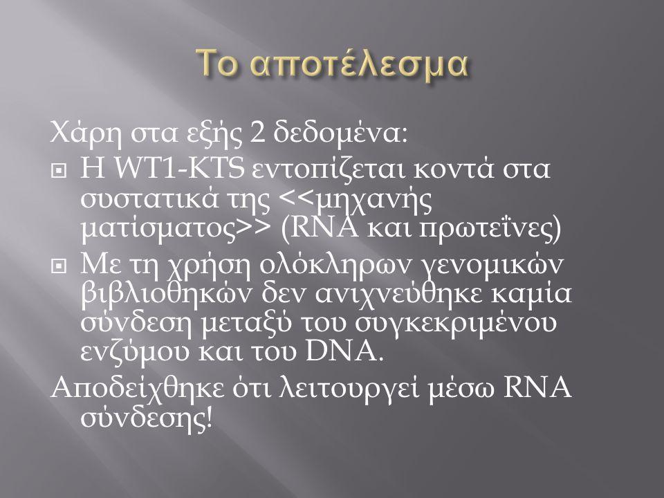 Χάρη στα εξής 2 δεδομένα:  Η WT1-KTS εντοπίζεται κοντά στα συστατικά της > (RNA και πρωτεΐνες)  Με τη χρήση ολόκληρων γενομικών βιβλιοθηκών δεν ανιχ