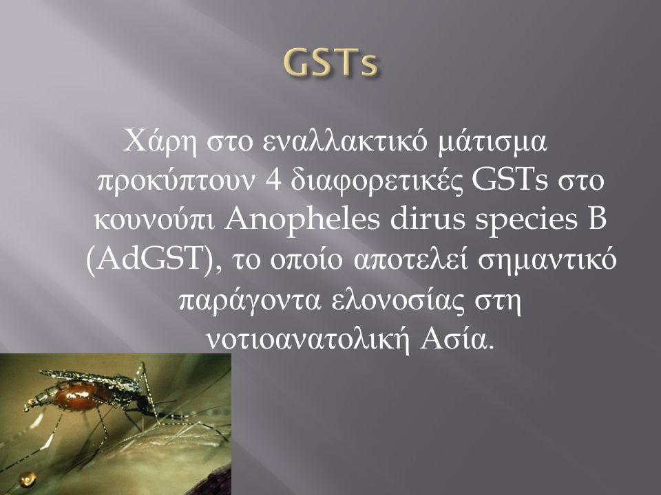 Χάρη στο εναλλακτικό μάτισμα προκύπτουν 4 διαφορετικές GSTs στο κουνούπι Anopheles dirus species B (AdGST), το οποίο αποτελεί σημαντικό παράγοντα ελον