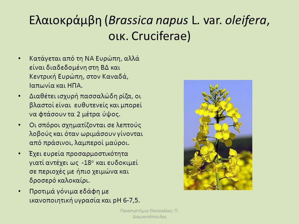 Ελαιοκράμβη (Βrassica napus L. var. oleifera, οικ. Cruciferae) Κατάγεται από τη ΝΑ Ευρώπη, αλλά είναι διαδεδομένη στη ΒΔ και Κεντρική Ευρώπη, στον Καν