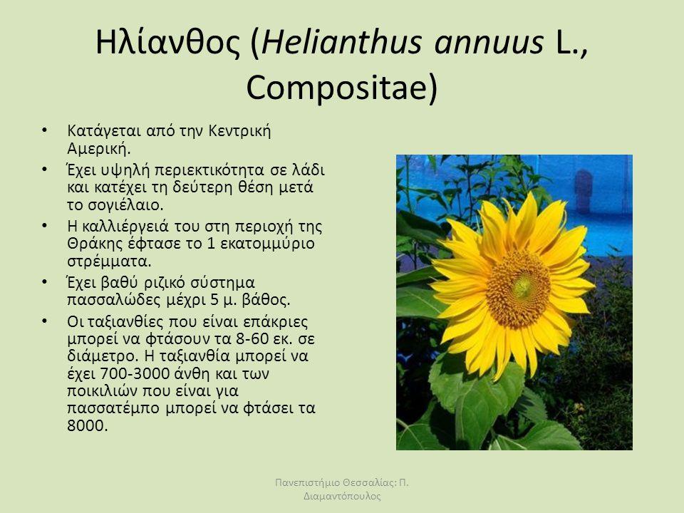 Ηλίανθος (Helianthus annuus L., Compositae) Κατάγεται από την Κεντρική Αμερική. Έχει υψηλή περιεκτικότητα σε λάδι και κατέχει τη δεύτερη θέση μετά το
