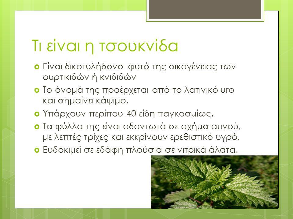 Τι είναι η τσουκνίδα  Είναι δικοτυλήδονο φυτό της οικογένειας των ουρτικιδών ή κνιδιδών  Το όνομά της προέρχεται από το λατινικό uro και σημαίνει κά