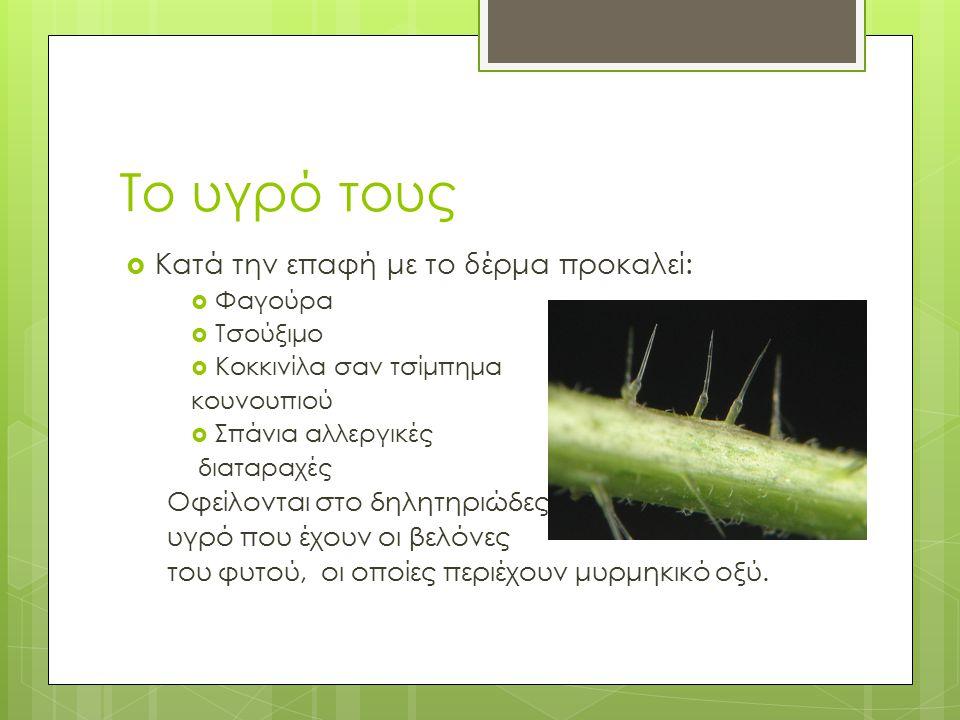 Μερικά είδη τσουκνίδας  Κνίδη η δίοικος  Κνίδη η καυστηρά  Κνίδη η μεμβρανώδης  Κνίδη η σφαιριδιοφόρος  Κνίδη η καννάβινος  Κνίδη η καυστηροτάτη  Κνίδη η θηριώδης - Ενδημικό είδος της Νέας Ζηλανδίας.