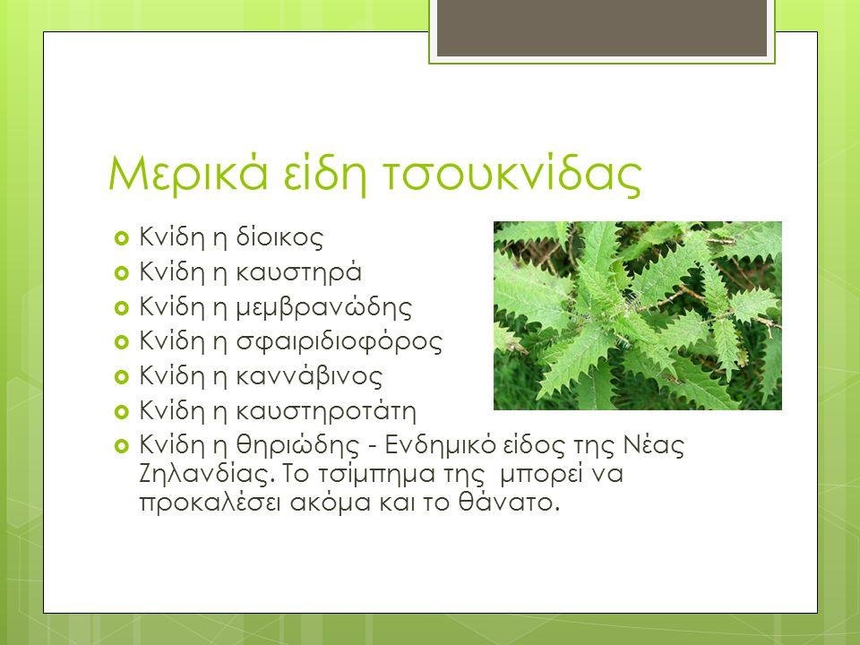 Μερικά είδη τσουκνίδας  Κνίδη η δίοικος  Κνίδη η καυστηρά  Κνίδη η μεμβρανώδης  Κνίδη η σφαιριδιοφόρος  Κνίδη η καννάβινος  Κνίδη η καυστηροτάτη