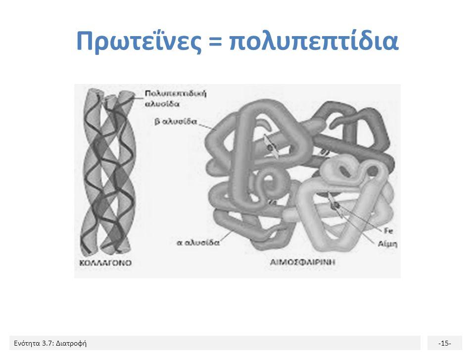 Ενότητα 3.7: Διατροφή-15- Πρωτεΐνες = πολυπεπτίδια