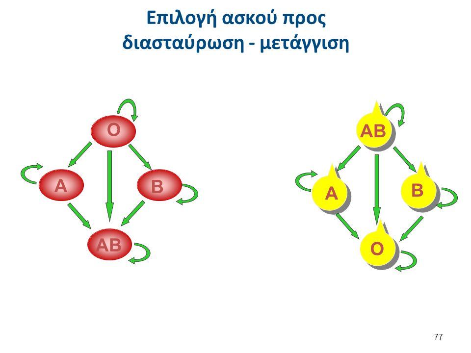 Επιλογή ασκού προς διασταύρωση - μετάγγιση Ο Α Ο Α ΑΒ Β Β 77