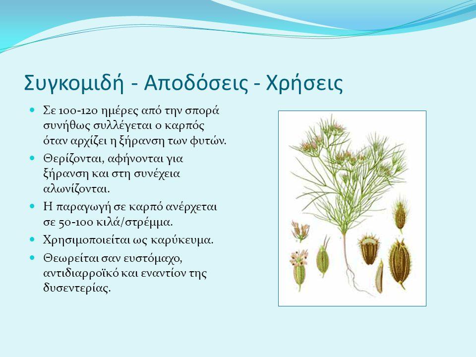 Συγκομιδή - Αποδόσεις - Χρήσεις Σε 100-120 ημέρες από την σπορά συνήθως συλλέγεται ο καρπός όταν αρχίζει η ξήρανση των φυτών.