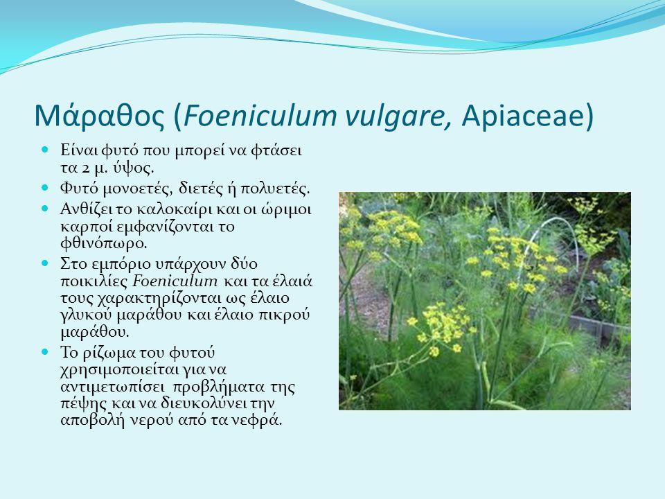 Μάραθος (Foeniculum vulgare, Apiaceae) Είναι φυτό που μπορεί να φτάσει τα 2 μ.