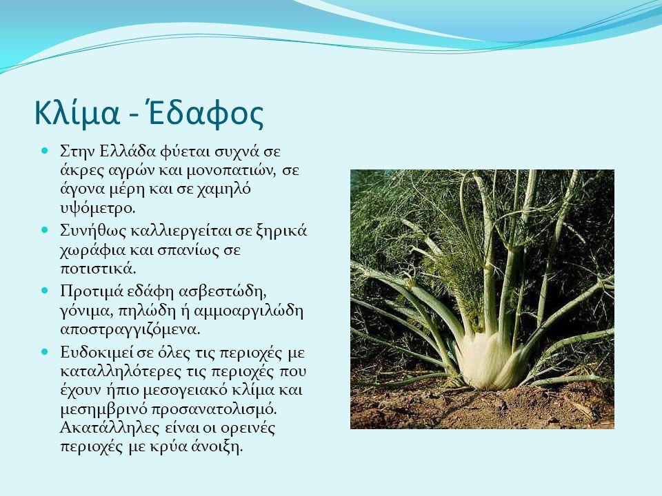 Κλίμα - Έδαφος Στην Ελλάδα φύεται συχνά σε άκρες αγρών και μονοπατιών, σε άγονα μέρη και σε χαμηλό υψόμετρο.