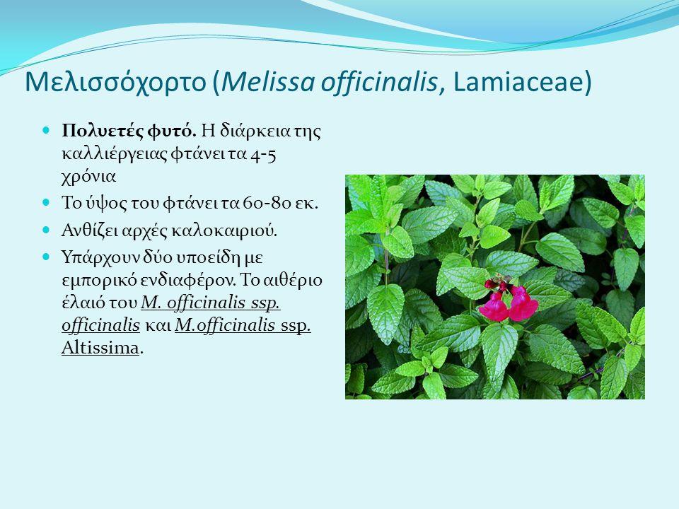Μελισσόχορτο (Melissa officinalis, Lamiaceae) Πολυετές φυτό.