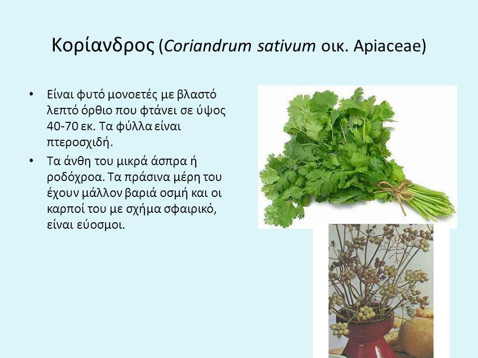Kορίανδρος (Coriandrum sativum οικ.