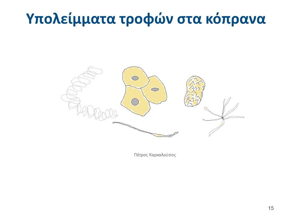 Υπολείμματα τροφών στα κόπρανα 15 Πέτρος Καρκαλούσος