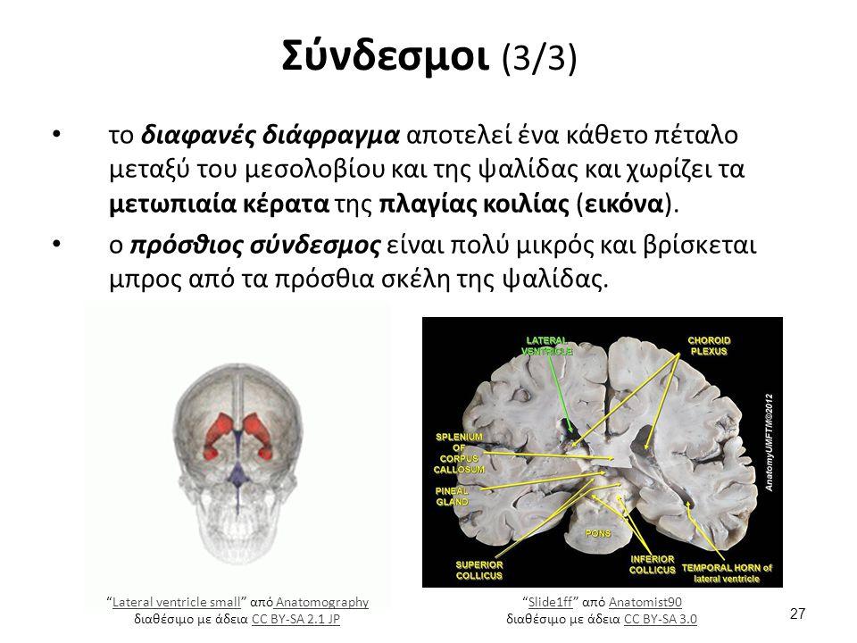 το διαφανές διάφραγμα αποτελεί ένα κάθετο πέταλο μεταξύ του μεσολοβίου και της ψαλίδας και χωρίζει τα μετωπιαία κέρατα της πλαγίας κοιλίας (εικόνα). ο