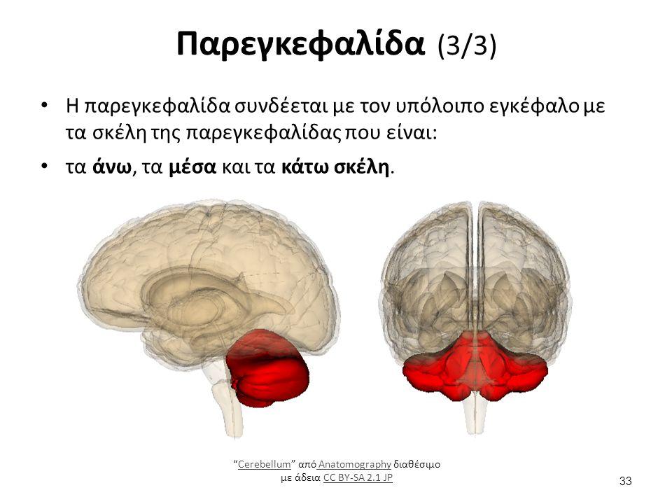 """Η παρεγκεφαλίδα συνδέεται με τον υπόλοιπο εγκέφαλο με τα σκέλη της παρεγκεφαλίδας που είναι: τα άνω, τα μέσα και τα κάτω σκέλη. Παρεγκεφαλίδα (3/3) """"C"""