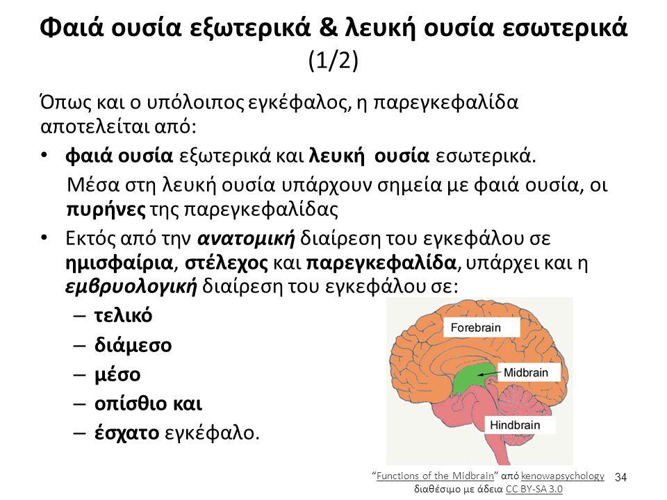 Όπως και ο υπόλοιπος εγκέφαλος, η παρεγκεφαλίδα αποτελείται από: φαιά ουσία εξωτερικά και λευκή ουσία εσωτερικά. Μέσα στη λευκή ουσία υπάρχουν σημεία